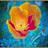 California poppy © 2010
