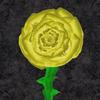 Yellow Rose of Texas © 2011